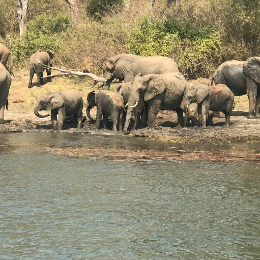 A herd of elephants on the riverbank