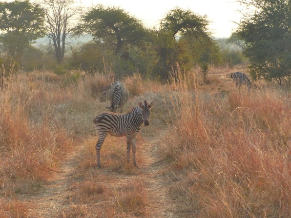 A zebra crossing